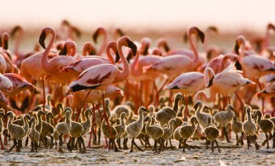 Avtours - Safaria Kenia
